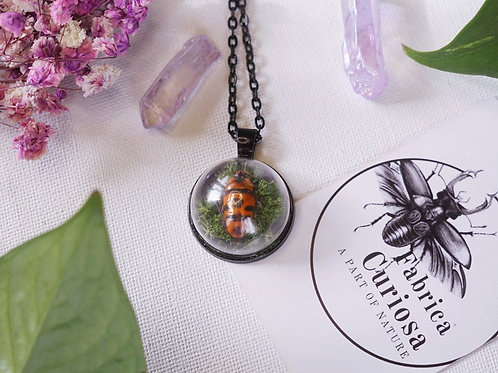 Collier shielbug sur mousse.