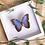 Thumbnail: Morpho Heleonor carillensis