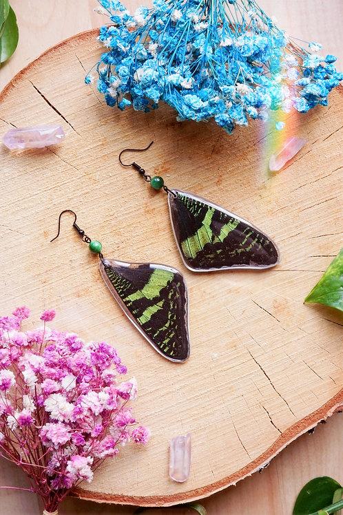 Boucles d'oreilles Urania Ripheus et perle