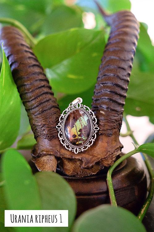 Collier argenté aile de papillon preservé .