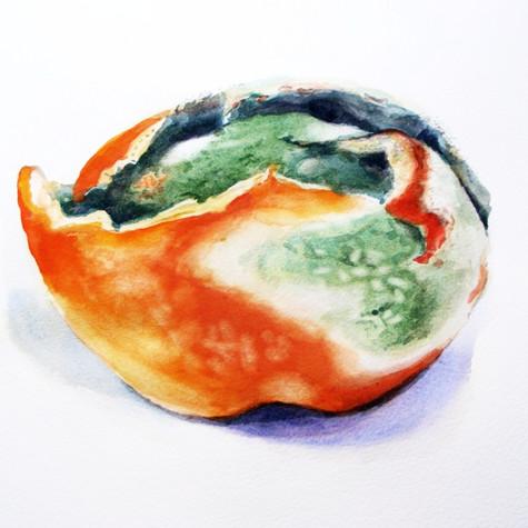 Mature Citrus Peel