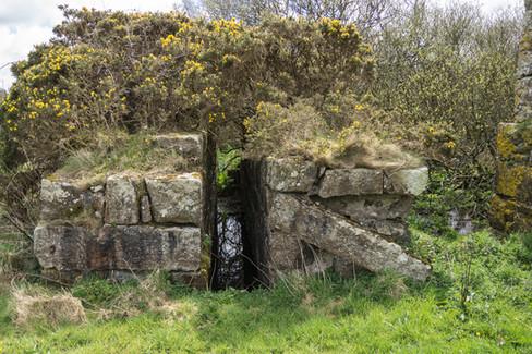 19. Medlyn Moor Mine