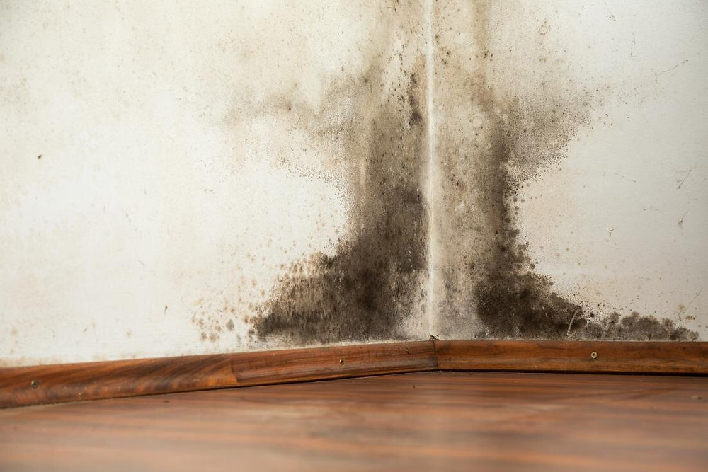 Mold is a common home-hazard