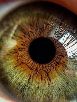 Online iridology assessment service in a few easy steps from the comfort of your home