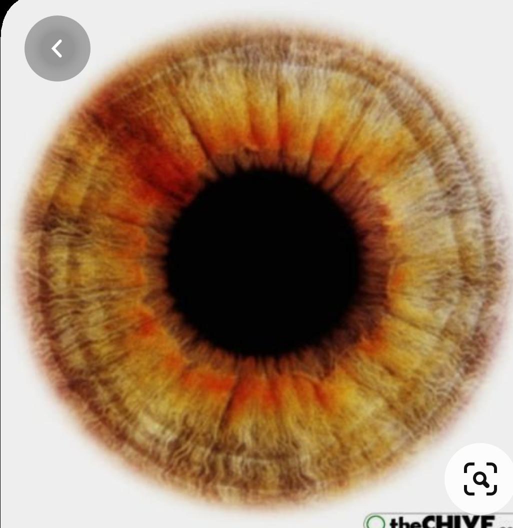 Iridology - eye analysis, online service.