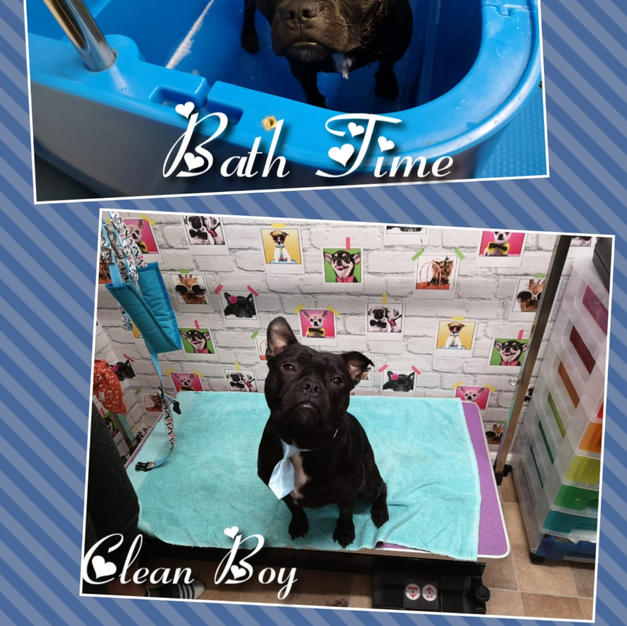Lovely Charlie came in for a bath and tidy up