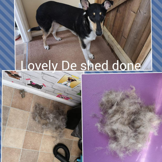 Jessie came in for a bath and a de shed