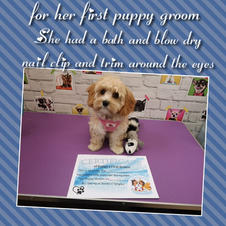 lovely mia had her puppy groom