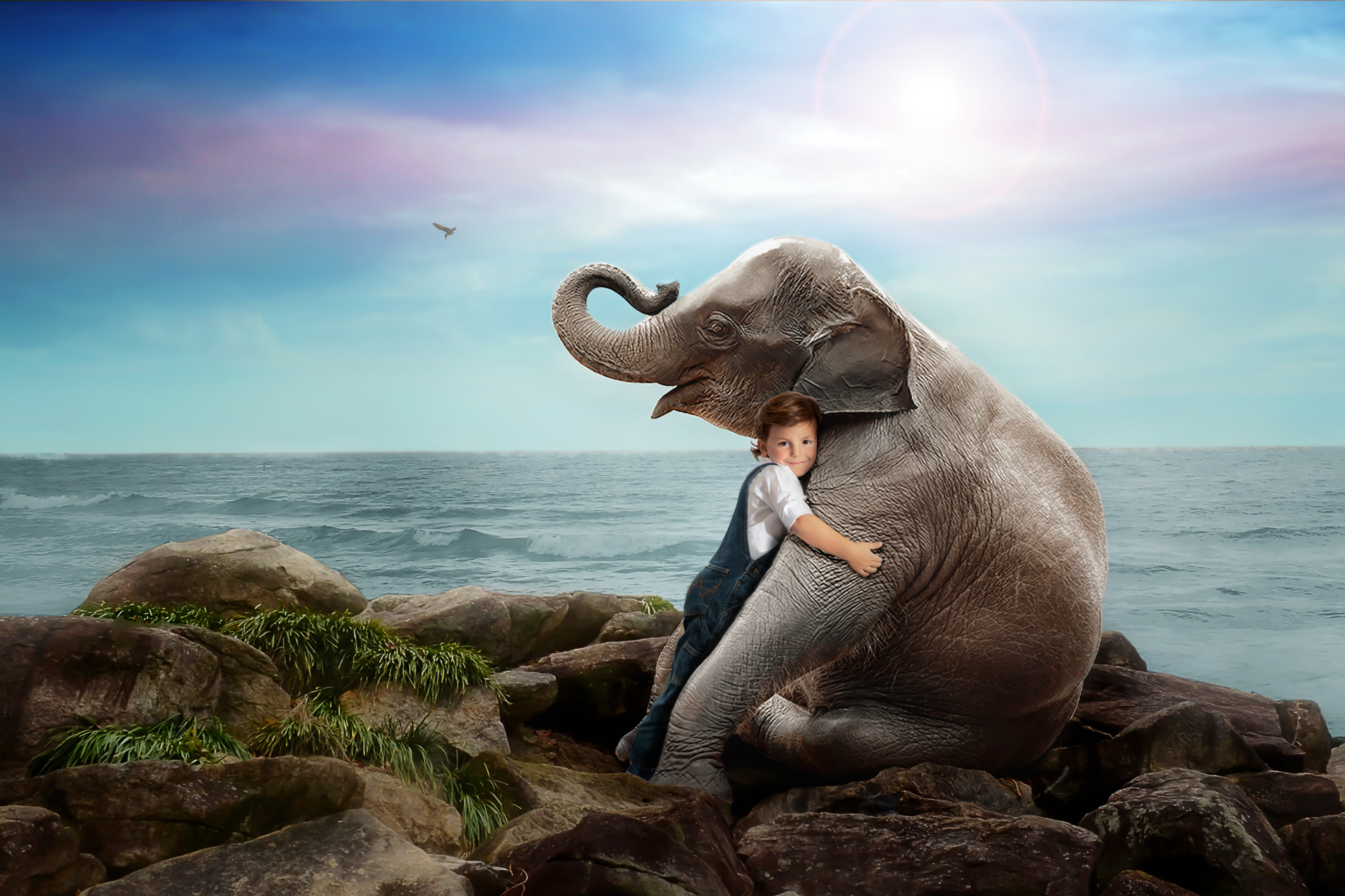 Sweet boy Hugging Elephant Imagination