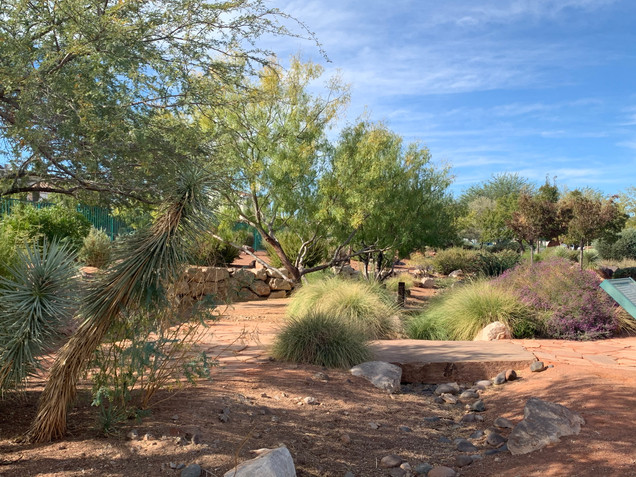 Acacia Demonstration Gardens || Henderson