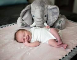 Ellsworth Newborn Session