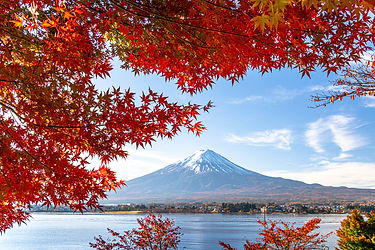yamanashi-Mt.Fuji_and_autumn_leaves_on_t