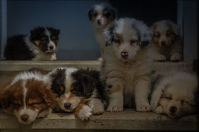 puppies (3).JPG