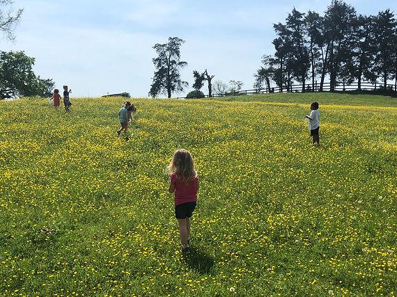 Hazelwild Farm