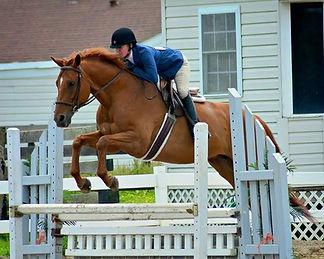 Hazelwild Farm Equestrian Programs