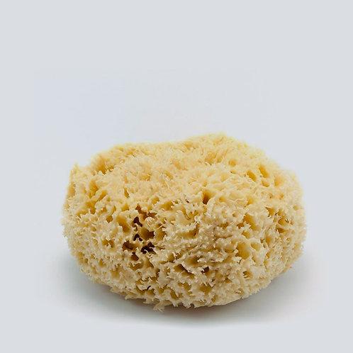 Natural Sea Wool Sponge