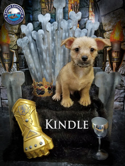 Kindle 0504 throne