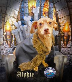 GOT Alphie 082017