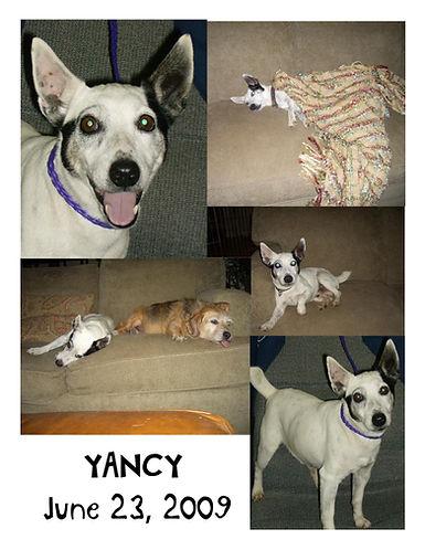 Yancy Tribute.jpg
