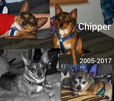 Chipper.jpg