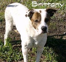 Brittany3.jpg