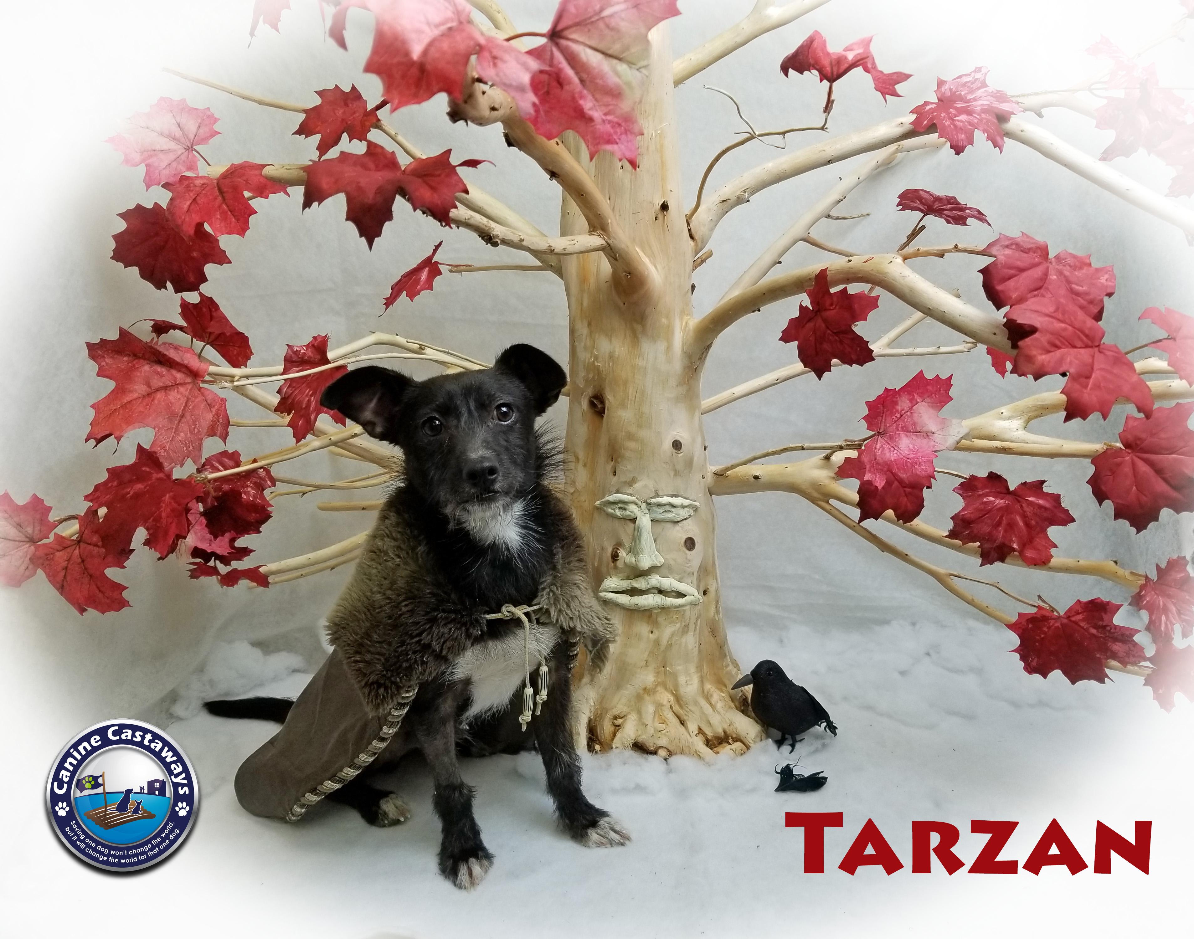 Tarzan 0428 tree