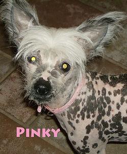 Pinky2 .jpg