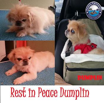 Dumplin rest in peace.jpg