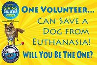 one volunteer.jpg