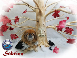 Sabrina 0504 tree