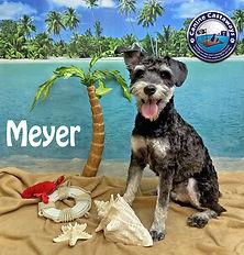 Meyer 061321 beach 2.jpg