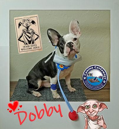 Dobby Doctor 0909.jpg