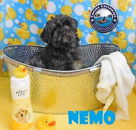 Nemo tub.jpg