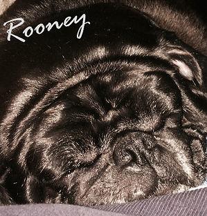 Rooney pug.jpg