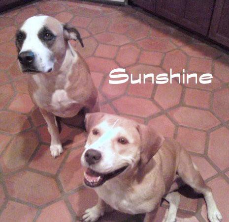 Sunshine at Foster.jpg