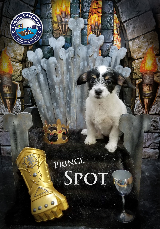 Spot 0504 throne