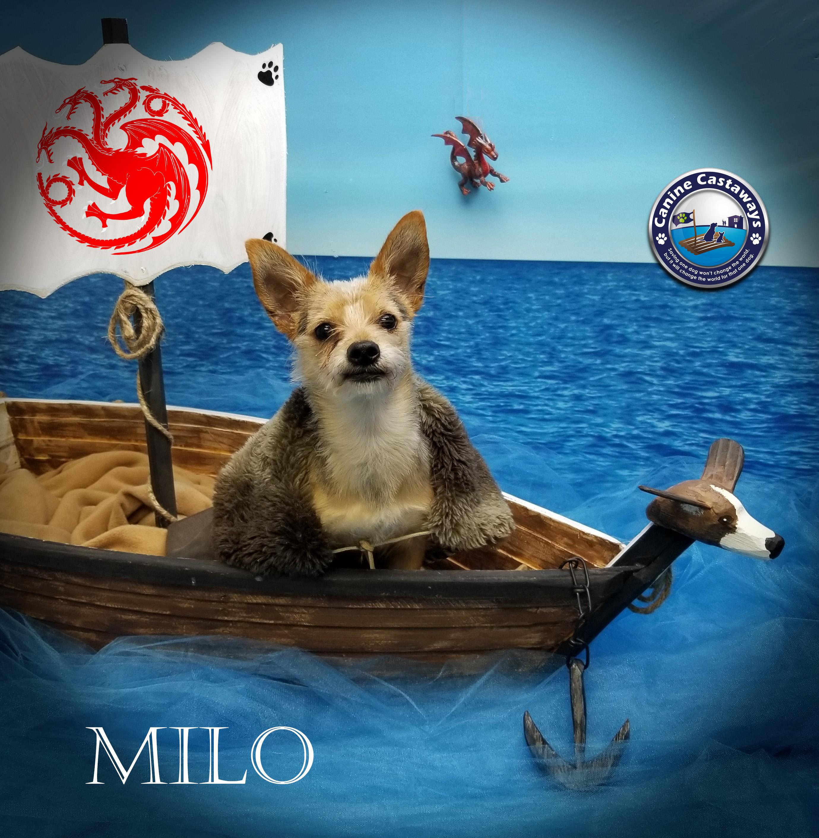 Milo 0518 ship
