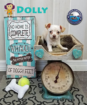 Dolly 0714 scale.jpg
