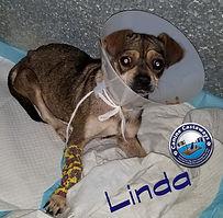 Linda 120819.jpg