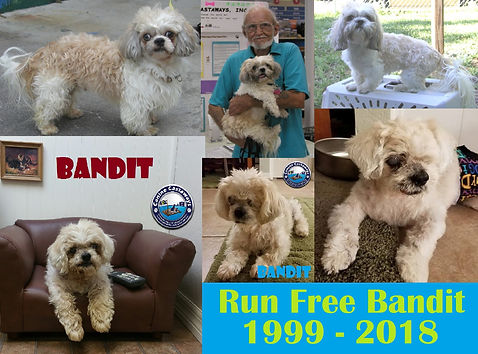 RIP Bandit.jpg