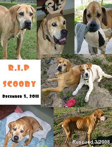 Scooby RIP.jpg