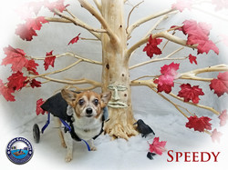 Speedy 0504 tree