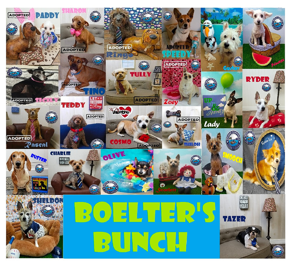 Boelter Bunch adopted updated.jpg