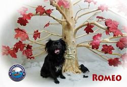 Romeo 0428 tree