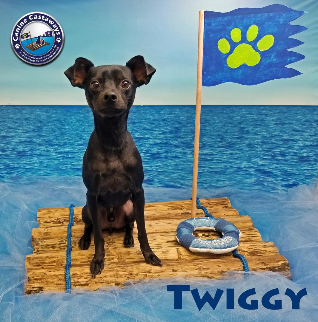 Twiggy 030820 raft.jpg