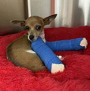 Willie after surgery 031021.jpg