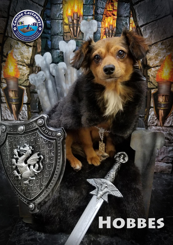 Hobbes 0519 throne (1)