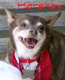 rip Hershey3.jpg