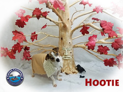 Hootie 0428 tree