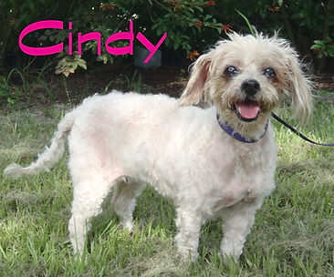 Cindy senior.JPG